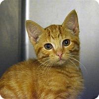 Adopt A Pet :: Tangelo - Versailles, KY
