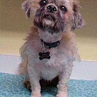 Adopt A Pet :: Dillard - 15 lbs - Dahlgren, VA
