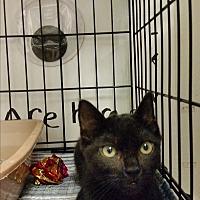 Adopt A Pet :: Dusk - Bloomingdale, NJ