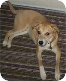 Terrier (Unknown Type, Small)/Labrador Retriever Mix Dog for adoption in Hamilton, Ontario - Kobe