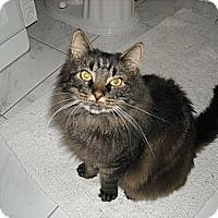 Adopt A Pet :: Lady - Arlington, VA