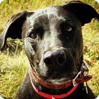 Adopt A Pet :: Sage - Cheyenne, WY