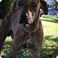 Adopt A Pet :: JEP - Broomfield, CO