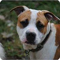 Adopt A Pet :: Tonka - Albany, NY