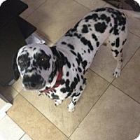 Adopt A Pet :: Dash - League City, TX