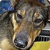 Adopt A Pet :: Sandy - NEEDS FOSTER! - Sacramento, CA