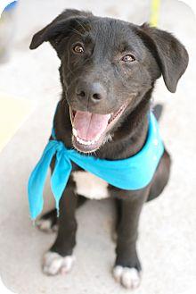 Labrador Retriever Mix Dog for adoption in Marietta, Georgia - Eeyore