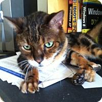 Adopt A Pet :: Zen - Laguna Woods, CA