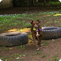 Adopt A Pet :: Alma - Eugene, OR