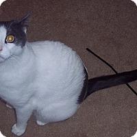 Adopt A Pet :: Elie - brewerton, NY