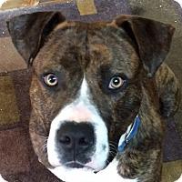 Adopt A Pet :: Moe - Newnan, GA