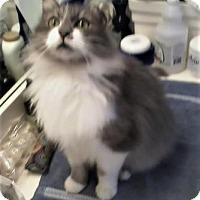 Adopt A Pet :: Alabama - McDonough, GA