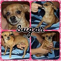 Adopt A Pet :: Sugar - Phoenix, AZ