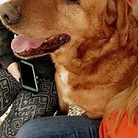 Adopt A Pet :: Rikki - Wilmington, OH