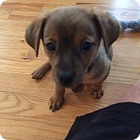 Adopt A Pet :: Toolie - Alpharetta, GA