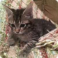 Adopt A Pet :: Drake - Reston, VA