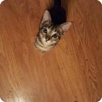 Adopt A Pet :: Emma - McHenry, IL