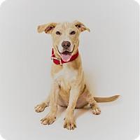 Adopt A Pet :: HENRY - Harrisburg, PA
