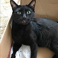 Adopt A Pet :: Freddy - Frankfort, IL