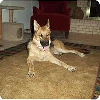 Adopt A Pet :: Super Nova - Green Cove Springs, FL