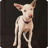 Adopt A Pet :: Miss Piglet - Newcastle, OK