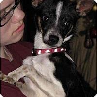 Adopt A Pet :: Comet - Houston, TX