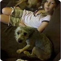 Adopt A Pet :: Mikey - Murfreesboro, TN