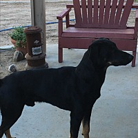 Doberman Pinscher Mix Dog for adoption in Nuevo, California - Toby