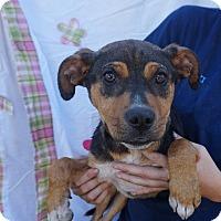 Adopt A Pet :: Darwin - Oviedo, FL