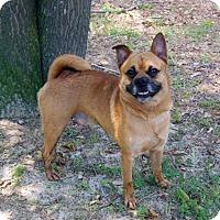 Adopt A Pet :: Abu - Irmo, SC