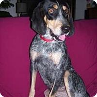 Adopt A Pet :: diva - Ontario, ON
