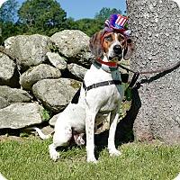 Adopt A Pet :: Hugo - Sagaponack, NY