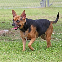 Adopt A Pet :: Xenia - Savannah, TN