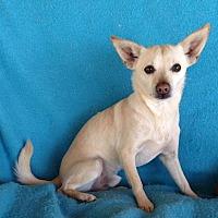 Adopt A Pet :: Jackson - Temecula, CA
