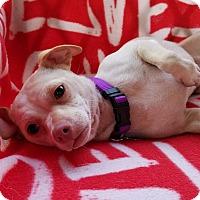 Adopt A Pet :: Zelia - Hamilton, ON