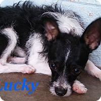 Adopt A Pet :: Lucky - El Cajon, CA