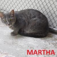 Domestic Shorthair/Domestic Shorthair Mix Cat for adoption in Franklin, North Carolina - Martha