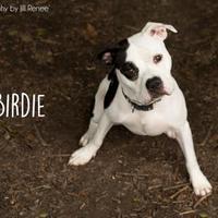 Adopt A Pet :: Birdie - Kansas City, MO