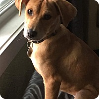 Adopt A Pet :: Willow - Madison, WI