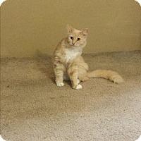 Adopt A Pet :: Princess Thea - Sacramento, CA