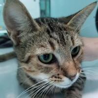 Adopt A Pet :: Bumper - Spartanburg, SC