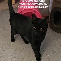 Adopt A Pet :: Sophia - Marlboro, NJ