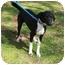Photo 2 - Labrador Retriever Mix Dog for adoption in kennebunkport, Maine - Skipo-ADOPTED!