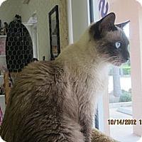 Adopt A Pet :: Mocha - Bunnell, FL