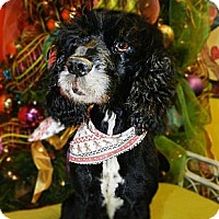 Adopt A Pet :: Astor - Hendersonville, TN