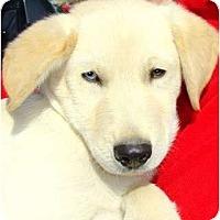 Adopt A Pet :: DAMIEN - Hendersonville, TN