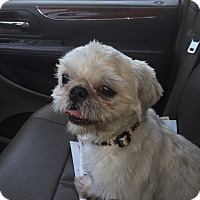 Adopt A Pet :: kobe - Los Angeles, CA