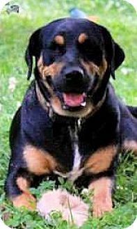 Rottweiler Mix Dog for adoption in Naugatuck, Connecticut - Deja