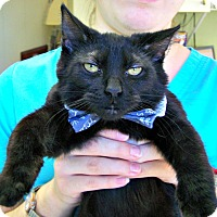 Adopt A Pet :: Aragorn - Toledo, OH