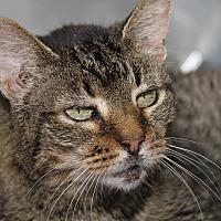 Adopt A Pet :: Carla (Spayed) - Marietta, OH